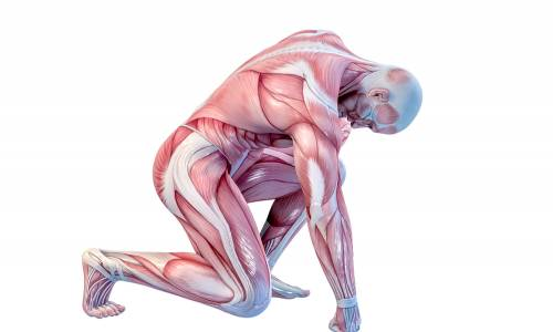 Inflammation and Repair in Soft Tissue in Sports Injuries